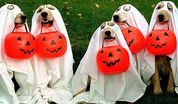 halloween_costumes_30